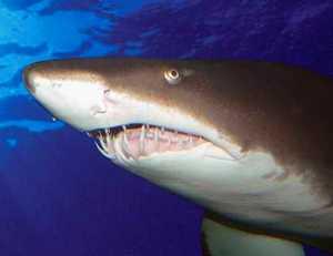 Aquaria KLCC Kuala Lumpur shark