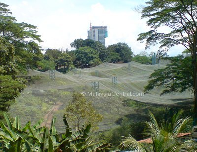 Kuala Lumpur bird park worlds largest free flying bird aviary net